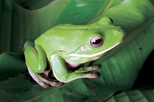 Frogs are very sensitive and do not tolerate unhealthy living environments.