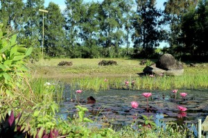 Ponds strategically placed to catch runoff and attract wildlife.