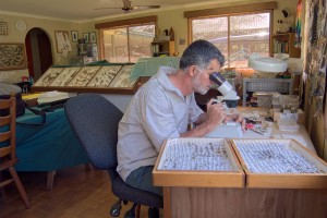 Regular monitoring of the insect population allows us to gauge the health of the ecosystem on our farm.