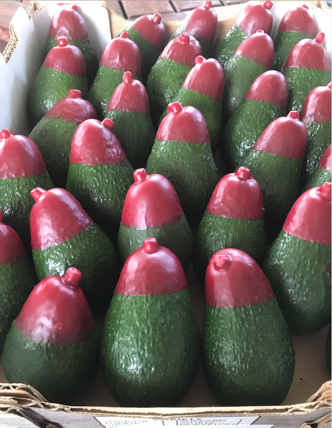 Red Tip Avocado